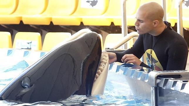 FOTO 7.- Cuidando a la orca