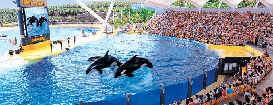 FOTO 3.- ORCAS