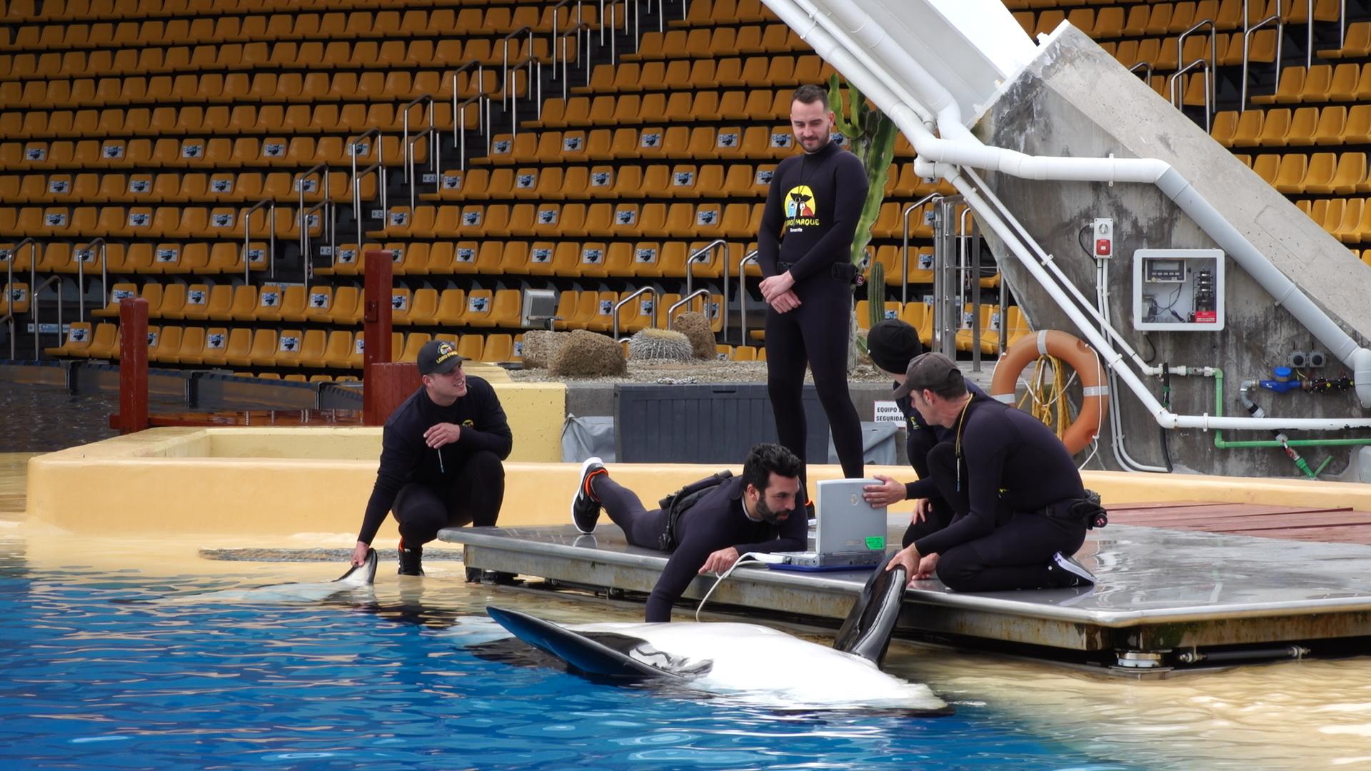 FOTO 1.- ORCA MORGAN